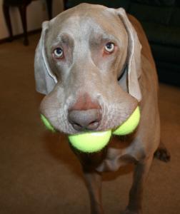 Dogw:tennisballs 2